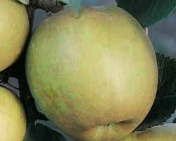 Pépinières Luc André - Le Saix - La pépinière - fruitiers